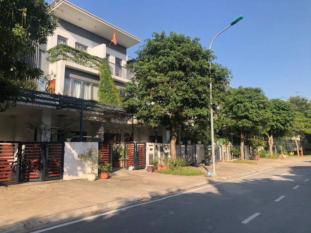 khu st3 đường 3.6 lily homes gamuda